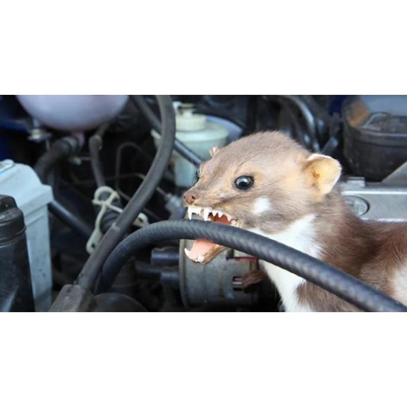 Come risolvere problema dei topi nel motore