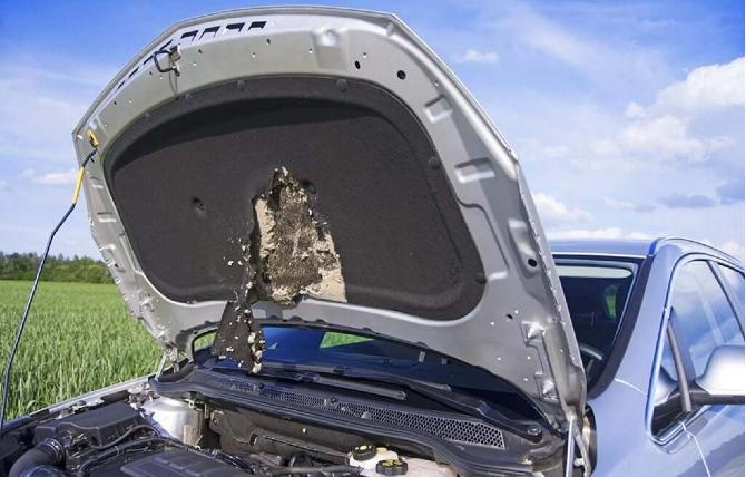 Topi annidati nel vano motore dell'auto
