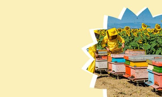 Attrezzatura completa per apicoltura e produzione del miele in casa
