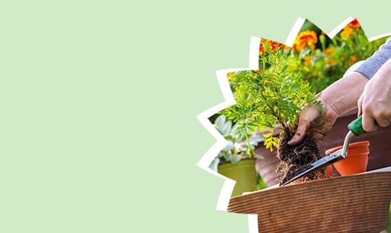 Attrezzatura per il giardinaggio e articoli di arredamento esterno